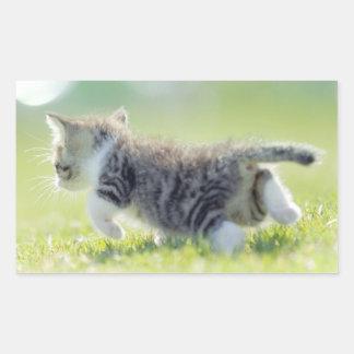 Sticker Rectangulaire Chat de bébé fonctionnant sur le champ d'herbe