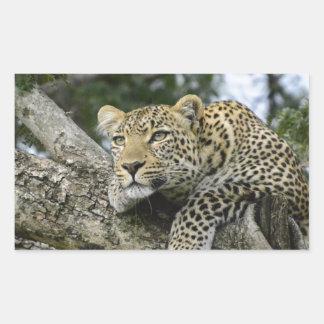 Sticker Rectangulaire Chat sauvage animal de safari de l'Afrique d'arbre