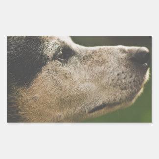 Sticker Rectangulaire chien
