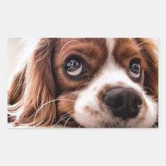 Sticker Rectangulaire Chien canin triste
