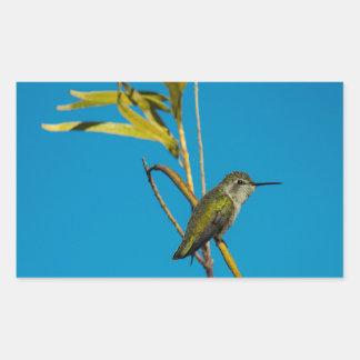 Sticker Rectangulaire Colibri femelle de rubis-gorge sur l'arbre