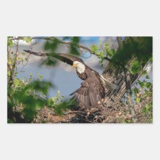 Sticker Rectangulaire Eagle chauve partant du nid