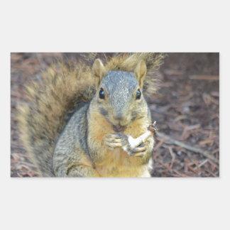 Sticker Rectangulaire Écureuil affamé heureux