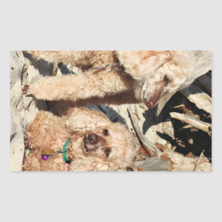 Sticker Rectangulaire Épuisement - caniches - Romeo Remy