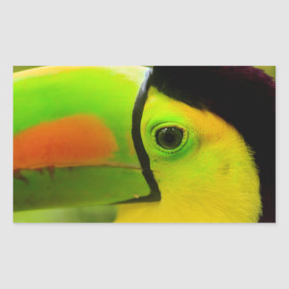 Sticker Rectangulaire Fin de visage de toucan, Belize