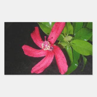 Sticker Rectangulaire hibiscus rouge