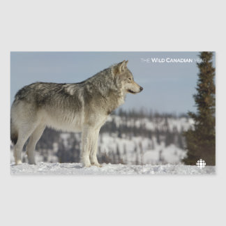 Sticker Rectangulaire Hiver - loup