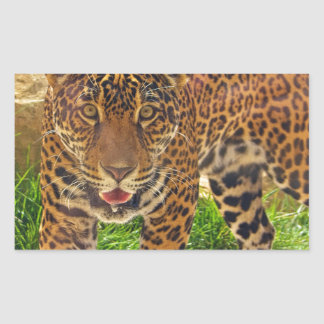 Sticker Rectangulaire Jaguar
