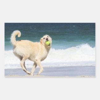 Sticker Rectangulaire Labradoodle - jour heureux sur la plage