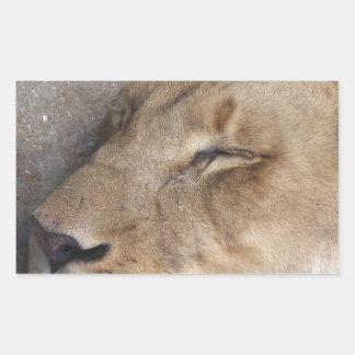 Sticker Rectangulaire Lionne de sommeil