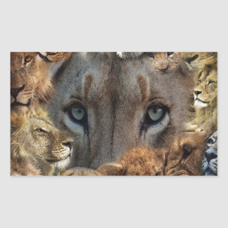 Sticker Rectangulaire Lions heureux