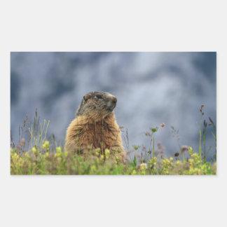 Sticker Rectangulaire marmotte sur le pré alpin