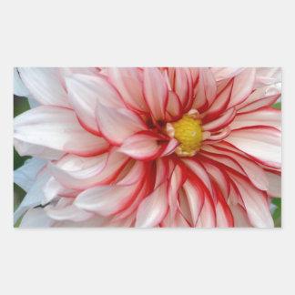 Sticker Rectangulaire Menthe poivrée florale