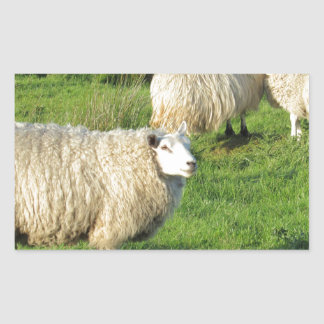 Sticker Rectangulaire Moutons irlandais