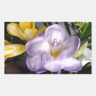 Sticker Rectangulaire ouvrez le freesia violet