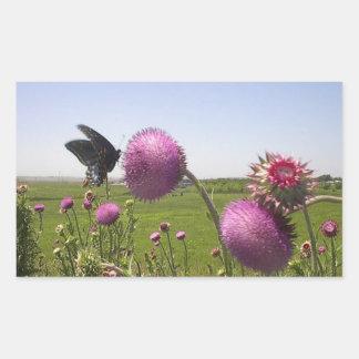 Sticker Rectangulaire Papillon grand de prairie d'herbe sur le chardon