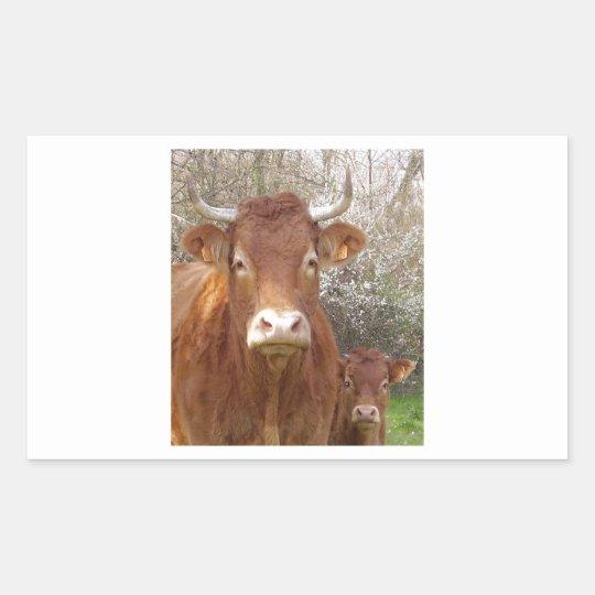Sticker Rectangulaire The cow and his calf - La vache et son veau