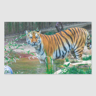 Sticker Rectangulaire Tigre