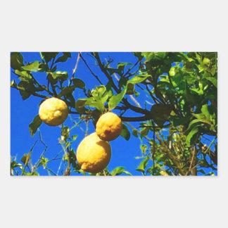 Sticker Rectangulaire Trois citrons siciliens
