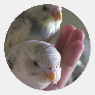 Sticker Rond Aaaaaw ! Portrait intime de deux perruches