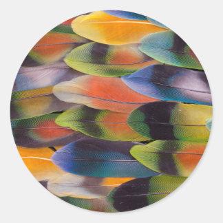 Sticker Rond Abrégé sur plumes de queue de perruche