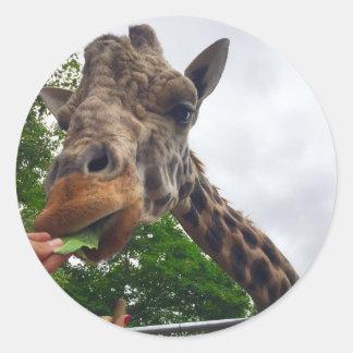 Sticker Rond Alimentez une girafe