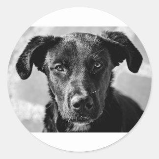 Sticker Rond Animal familier canin de chien