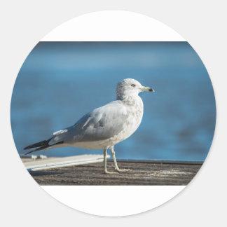 Sticker Rond Appelez-moi M.Seagull
