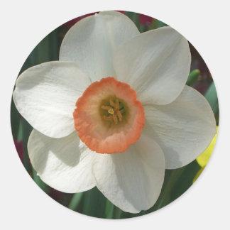 Sticker Rond Belle fleur de ressort de jonquille rose