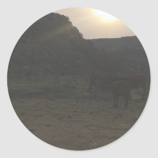 Sticker Rond Bétail de coucher du soleil