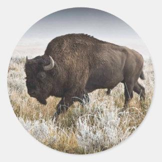 Sticker Rond Bison américain ou Buffalo
