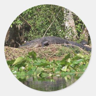 Sticker Rond bourdonnement de luv de l'alligator 201a