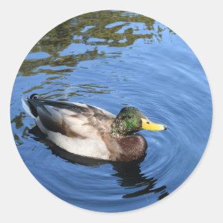 Sticker Rond Canard conservateur de Mallard de l'eau du Central