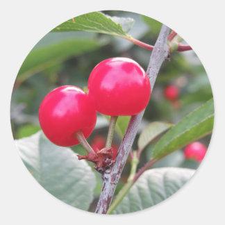 Sticker Rond Cerises rouges de Montmorency sur l'arbre dans le