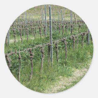 Sticker Rond Champ nu de vignoble en hiver. La Toscane, Italie