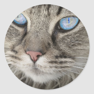 Sticker Rond Chat de tigre animal des plots réflectorisés de