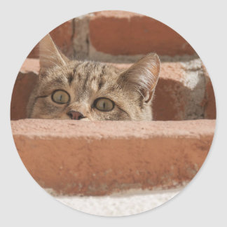 Sticker Rond Chat sauvage curieux d'attention des plots