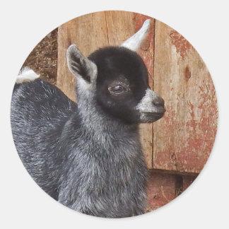 Sticker Rond Chèvre de bébé par la grange