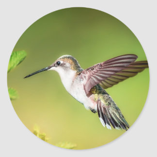 Sticker Rond Colibri en vol
