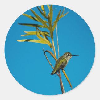 Sticker Rond Colibri femelle de rubis-gorge sur l'arbre