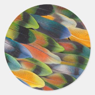 Sticker Rond Conception colorée de plume de perruche