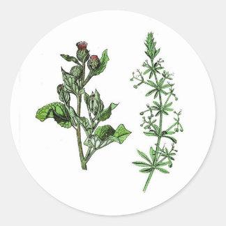 Sticker Rond Copie botanique vintage d'herbe d'oie de bardane