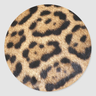Sticker Rond Copie de photo de fourrure de Jaguar
