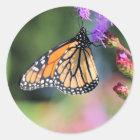 Sticker Rond Déjeuner de monarque