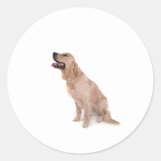 Sticker Rond dog - golden retriever