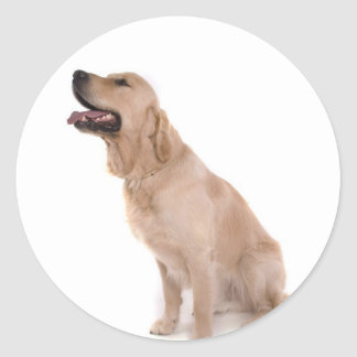 Sticker Rond dog - golden retriever