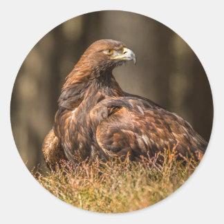 Sticker Rond Eagle fondé