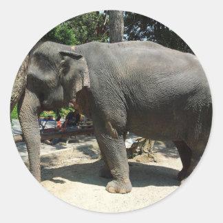 Sticker Rond Éléphants en Thaïlande