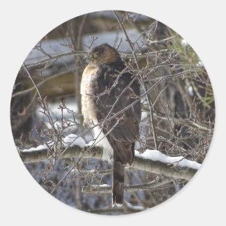 Sticker Rond faucon Large-à ailes