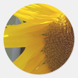 Sticker Rond Fermez-vous du tournesol jaune